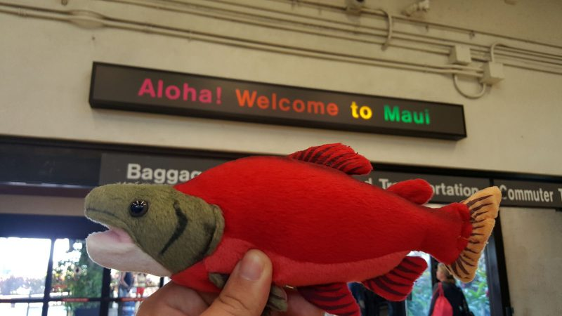 Hawaii_June_2016_0003